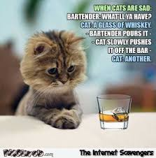 Sad Kitten Meme - when cats are sad funny meme pmslweb
