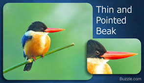 different types of bird beaks you u0027ll be amazed by the variety