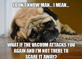 I Don T Know Man Meme - 100 hilarious pug memes pictures