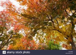 leaves trees changing colors change seasons