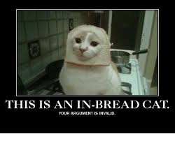 Cat In Bread Meme - 25 best memes about in bread cat in bread cat memes