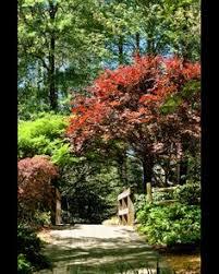 Clemson Botanical Garden by Sc Botanical Gardens Clemson South Carolina Sc 295 Acres With