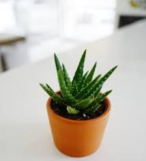 top house plants my top house plants and their benefits a briutiful life