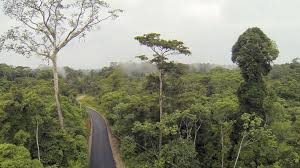 Above The Canopy by View Above The Rainforest Canopy With A Road Below In The