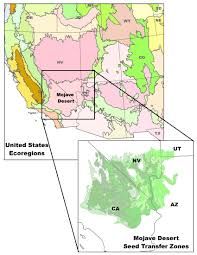 mojave desert native plants national seed strategy mojave desert seed transfer zones bureau