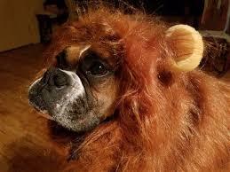 Dog Halloween Costume Lion Mane Boxer Dogs Halloween