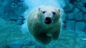 white bear images