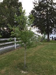 tree feed last vineyard