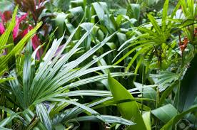 tropical rainforest native plants close up view on tropical garden stock photo picture and royalty