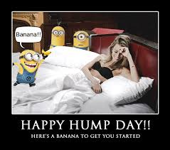 Happy Hump Day Memes - nsfw enjoyment to end your humpday feels gallery ebaum s world