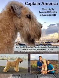 to the world collectibles wheaten terrier ornament available