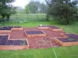 61 best veggie garden images on pinterest food fruit and gardening
