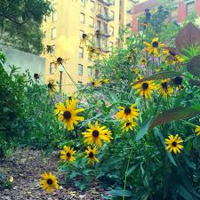 my garden story a secret rooftop oasis on manhattan u0027s upper west