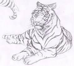 tiger sketches 3 by yvisama on deviantart