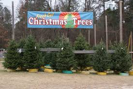 nov 22 2014 dec 21 2014 motleys christmas tree farm little