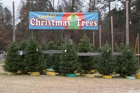 Nov 22 2014 Dec 21 2014 Motleys Christmas Tree Farm Little