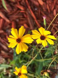florida native plant floridanativeplant hashtag on twitter