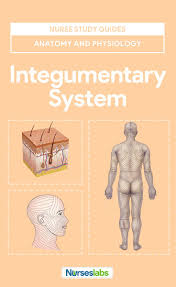 best 25 human integumentary system ideas on pinterest human