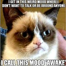 Angry Meme Cat - grumpy cat pregnancy memes for men
