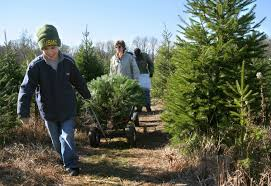 spruce goose christmas tree farm u2013 cut your own new jersey fresh