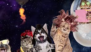 Cats In Small Spaces Video - could this be the music video with the most cats ever