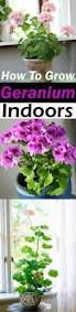 best 10 exotic house plants ideas on pinterest flowering house