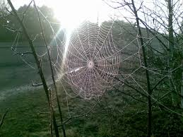 spinning a web between two trees earth earthsky