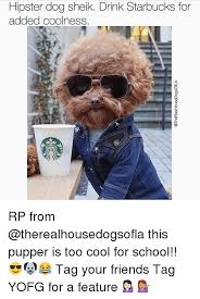 Hipster Dog Meme - hipster dog sheik drink starbucks for added coolness rp from this