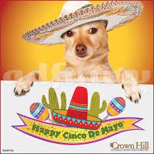 Memes De Chihuahua - happy cinco de mayo chihuahua facebook adfinity