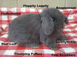 Bunny Meme - the anatomy of a fluffy bunny wunny proper anatomy know your meme