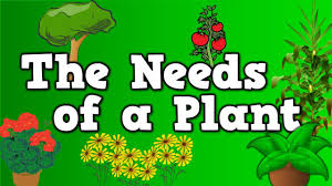 the needs of a plant song for kids about 5 things plants need to
