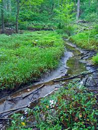 chappaqua n y file headwaters of saw mill river chappaqua ny jpg wikimedia