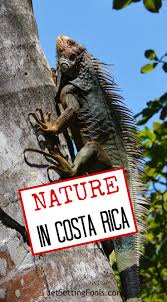 immersed in nature in costa rica jetsetting fools