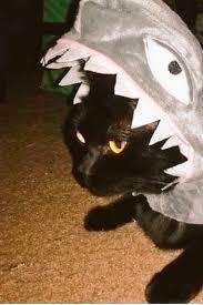 Halloween Costume Cats 25 Adorable Halloween Costume Ideas Cat