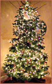 108 best christmas trees pacific northwest style images on