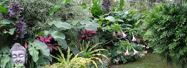 Nursery Plant Supplies by Landscaping Plant Nursery Industrial And Residential Projects In