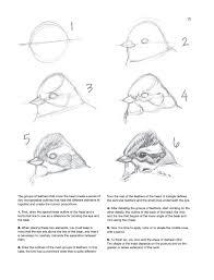 sketching u0026 illustrating birds professional drawing class juan