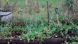 vegetable gardening blackberry burrow