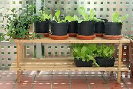 gem se pflanzen balkon balkon gemüse schwestern allerlei