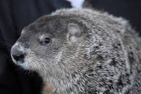 images groundhog