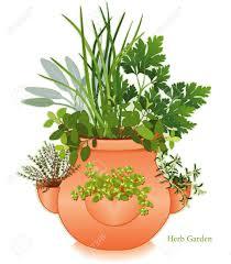 origan en cuisine herb garden dans planteur clay pot de fraises pour la cuisine