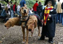 10 Scariest Halloween Costumes Boo Wow 10 Freakiest Scariest Halloween Dog Costumes
