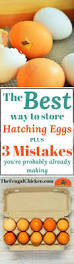 Best Chicken Coop Design Backyard Chickens by 1833 Best Chickens Images On Pinterest Backyard Chickens