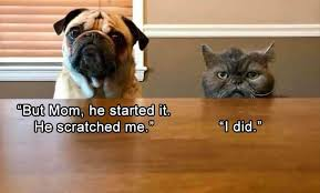 Memes Animals - i can has cheezburger memes page 3 animals on internets