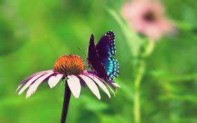 wonderful butterfly on a flowers summer wallpaper