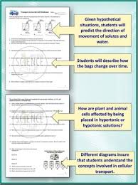 cell membrane transport worksheet osmosis diffusion by amy