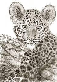 leopard cub drawing by onthemountaintop on deviantart