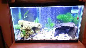 Beautiful Home Fish Tanks by Best Aquarium Ever 10 Gallon Planted Tank Tips N U0027 Tricks Youtube