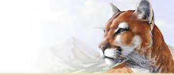 mountain lion facts trivia information and photos american