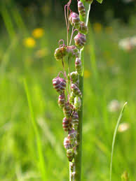 214 best garden ornamental grass r images on